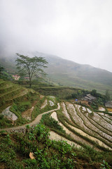 Stepped Rice Fields, Above Ta Van Village, Sapa, Vietnam (hathaway_m) Tags: northvietnam 2018 sapa rice steppedfield