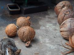 mekong (montageroom1) Tags: olympus em5 1240 vietnam hcmc asia travel street メコン ホーチミン ベトナム candid cat coconuts