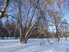 beautiful colour of snow (VERUSHKA4) Tags: shadow light sunnyday day winter hiver wintertime neve canon europe russia moscow city ville vue view cityscape sky ciel blue birchtree trunk nature outdoor january bough branch