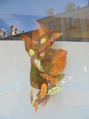 738 (en-ri) Tags: foglie leaves marrone vetrina sony sonysti