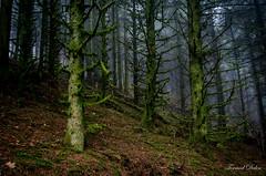 Forêt mousseux, temps brumeux (Tormod Dalen) Tags: tokina1735 forest forêt wood nature fog brume mousse moss sl17