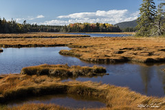 Grassy Marsh_27A7516 (Alfred J. Lockwood Photography) Tags: alfredjlockwood nature landscape marsh grasses acadianationalpark water forest autumn afternoon maine