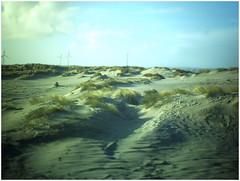 Neingrenze *277 (KKS_51) Tags: neingrenze5000t holland zeeland dunes dünen