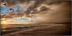 The Birds. (drpeterrath) Tags: beach ocean water sand sky cloud waves birds animal outdoor seascape landscape sunset sunrise losangeles santamonica california calilife canon eos 5dsr captureone