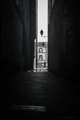 (Laura Sergiampietri) Tags: blackwhite biancoenero bw bn alley alleyway street streetphotography passerby pigeons contrast light darkness shadow walls narrow manhole manholecover lamps pisa pise lungarno smcpentaxa3570f3545 puddle smcpa3570f3545