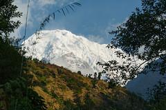 436_Jhinu_11 (andreavarju) Tags: 2018 annapurnasanctuary exploretrip himalaya nepal november sony autumn hike hiking mountains nature naturephotography sonyalpha sonyphotography travel travelphotography trekking landscape landscapephotography