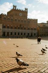 Piazza del Campo, Siena (Anna Vashulenko) Tags: pigeon architecture street film 35mm siena italy