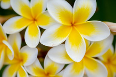 Life (Rushay) Tags: flower backgrounds plant petal yellow leaf nature portelizabeth southafrica