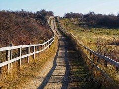 Fence shadows (Artybee) Tags: gibraltar point lincolnshire olympus mirrorless camera em10
