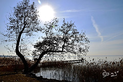 Un albero...in ognuno di Noi (Biagio ( Ricordi )) Tags: albero natura lago lake garda verona italy sole acqua