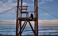 Mirando al mar (Rabadán Fotho) Tags: atardecer fotografia foto gato paisaje playa canon landscape