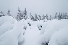 IMG_1363.jpg (niklasdd) Tags: schnee deutschland winter europa kälte germany weis snow bäume trees eis oremountains flickr erzgebirge cold saxony sachsen altenberg europe 9jähriges ice