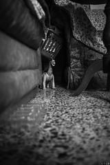 The cave (LTL78) Tags: dinosaur toy dinosaurio mexico fujifilm x100t