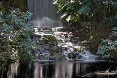 cascada jardin - CapOne - _GEA1302 1 (gedaesal) Tags: sonya7mii gedaesalgmailcom details nopeople colors waterfall jardinbotanicodebogota