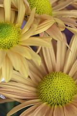 Formación (José Ramón de Lothlórien) Tags: corazón heart polen pistilos interior flor flores flower flowers beauty belleza colores calidez