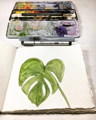 A suuuuper quick monstera sketch. Even if I wish I could show off something amazing to mark 1,300 days of daily art, I'm just too tired. But this still counts. It all counts. Every stroke of the pen or flick of the brush. Practice makes progress. It reall