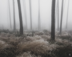 In the Fog II  /10 (KromOner) Tags: kromoner art design minimal dark nature forest trees woods silent solitude silence mood atmosphere quiet canon austria fog foggy mist misty lucid