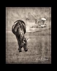 Spectral Grazer (Visions by Vincent) Tags: texture topaz art creative monochrome