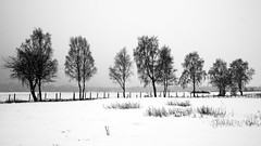 Trees in the snow (PeskyMesky) Tags: aberdeenshire ballater tree trees snow scotland landscape monochrome blackandwhite canon canon5d eos