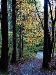 Autumn (jim2302) Tags: woods olympusomdem5ii 25mm f17 kingscourt rain hill trees autumn cavan ireland light backlit