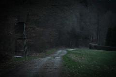 PGHS1509 (klangcharakter) Tags: panasonic gh5s mft lumix samyang 85mm f14 iso1600 1160sek wildsachsen hofheim taunus hessen wald natur nature wiese bäume baum jägerstand jäger weg feldweg luminar3