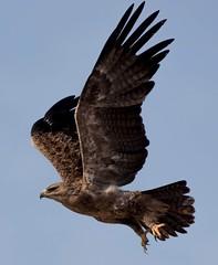 IMG-20180208-WA0006 (TARIQ HAMEED SULEMANI) Tags: sulemani tariq tourism trekking tariqhameedsulemani winter wildlife wild birds nature nikon