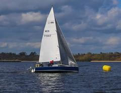 Bull finishes (antrimboatclub) Tags: antrimboatclub boat sail sailing ireland sixmilewater loughneagh antrimbay antrim