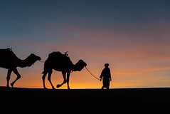 240_F_192159428_UBOvL0cGOPhRqozFGmk4DkLckBkeF8Ua (lhoussain) Tags: camel another life sunrise sunset calm relax berber women