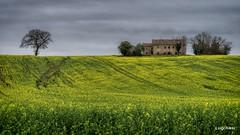 Campagna del maceratese (luigi.alesi) Tags: macerata marche italia italy recanat paesaggio rurale rural scene agricoltura agricolture landscape scenery vecchio casolare old farm nikon d750 raw