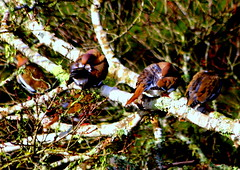 TABS committee for public relations (austexican718) Tags: backyard bird nature texas native fauna centraltexas wildlife dove tree animal behavior funny comical