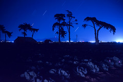 (patrickjoust) Tags: fujica gw690 kodak ektachrome 64t 6x9 medium format 120 rangefinder 90mm f35 fujinon lens chrome slide e6 color reversal expired tungsten balanced discontinued film cable release tripod long exposure night after dark manual focus analog mechanical patrick joust patrickjoust california coast ca usa us united states north america estados unidos farm field monterey county star trail light streak trees outline profile barn