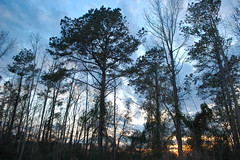 Daylight's Ending. (dccradio) Tags: lumberton nc northcarolina robesoncounty outdoor outdoors outside nature natural sky tree trees woods wooded forest march monday spring springtime evening mondayevening goodevening nikon d40 dslr cloud clouds