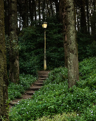 The Forest Path (Gene Mordaunt) Tags: trees path forest lamp streetlight nikon810 portugal sintra