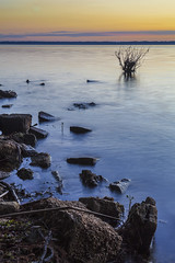 Curvature (andrew.romans) Tags: leadinglines lake florida sunrise early morning longexposure goldenhour beautifulearth colorful
