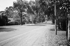 Mount Dandenong Tourist Road (Matthew Paul Argall) Tags: hanimex35es fixedfocus focusfree 35mmfilm blackandwhite blackandwhitefilm kentmerepan100 100isofilm road street mountdandenongtouristroad