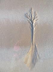 Beach tree (Mrs Butterbur) Tags: scotland gb uk sand beach low tide