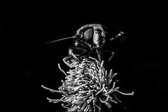 DRA100921_030 (dmitryzhkov) Tags: animal birds animals europe life wildlife wild analog film epson scan nature naturephotography moscow russia dmitryryzhkov outdoor environment biology zoology fly diptera bw blackandwhite monochrome flyselect