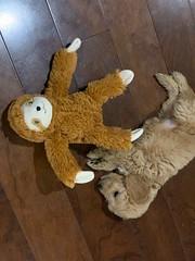 Jessie with her nap buddy