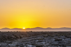 _RJS4717 (rjsnyc2) Tags: 2019 africa d850 desert dunes landscape namibia nikon outdoors photography remoteyear richardsilver richardsilverphoto safari sand sanddune travel travelphotographer animal camping nature tent trees wildlife