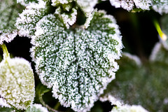 Coeur de glace (Meculda) Tags: coeur glace froid hiver nature green vert white feuille nikon macro sigma extérieur