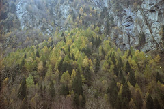 (Silvia Kuro) Tags: forest mountain mountains montagna montagne foresta trees tree alberi autumn autunno 35mm film photography analog analogue nature natura wood woods