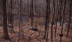 The ravine and the river (Violet aka vbd) Tags: pentax k1ii k1markii hdpentaxda55300mmf4563edplmwrre ct connecticut newengland vbd trees river rocks winter2019 2019 handheld vista landscape manualexposure woods forest ravine