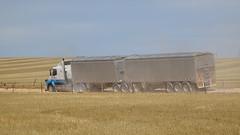 0430 Korntransporter - Grain-Train, Mallala (roving_spirits) Tags: australia australien australie southaustralia