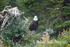 Avalon Peninsula (285) (Framemaker 2014) Tags: avalon peninsula newfoundland labrador canada salmonier nature park holyrod