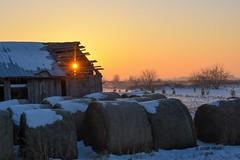 Morning on the Farm (jenny_miner) Tags: farm barn hay bales balesofhay sunrise sun sunrays oldbuilding morning winter snow sunstar sunshine field wisconsin buenavistagrasslands