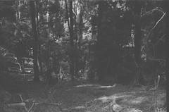 Dark forest (Matthew Paul Argall) Tags: beirettevsn 35mmfilm blackandwhite blackandwhitefilm kentmere100 100isofilm forest
