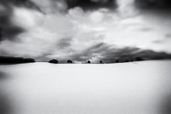 3376 (Elke Kulhawy) Tags: snow lensbaby lensbabycomposer schnee weiss white monochrome blackandwhite bnw bw bwphotographie bnwbw grain grainy landscape landschaft art kunst verschwommen
