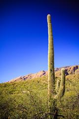 IMG_1290 (Victor Hernandez Photography) Tags: canon canonphotography canon7d arizona sabino canyon cactus saguaro desert az