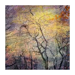 Colours (gerainte1) Tags: trees woodland woods autumn colour yorkshire film portra400 hasselblad501