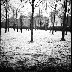 雪景色 (frenchvalve) Tags: 雪 植木屋 中判 snow trees film 120 120rollfilm 6x6 mediumformat analog monochrome bnw primoflex